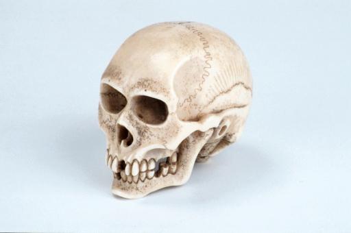 netsuke skull
