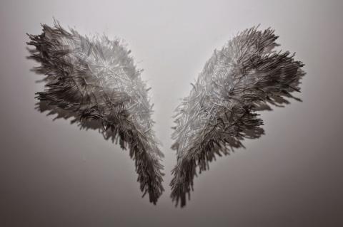 shelly xue angel wings
