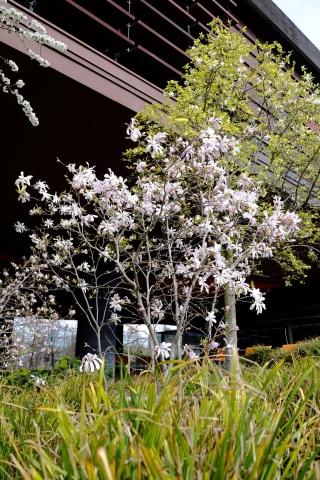 image musee du quai branly blossom